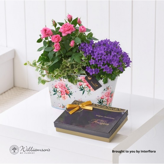 Summer Planted Tin with Belgian Chocolates (115g)