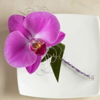 Ladies Simple Phalanopsis Orchid Corsage