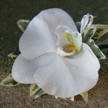 Ladies Phalanopsis Orchid Corsage